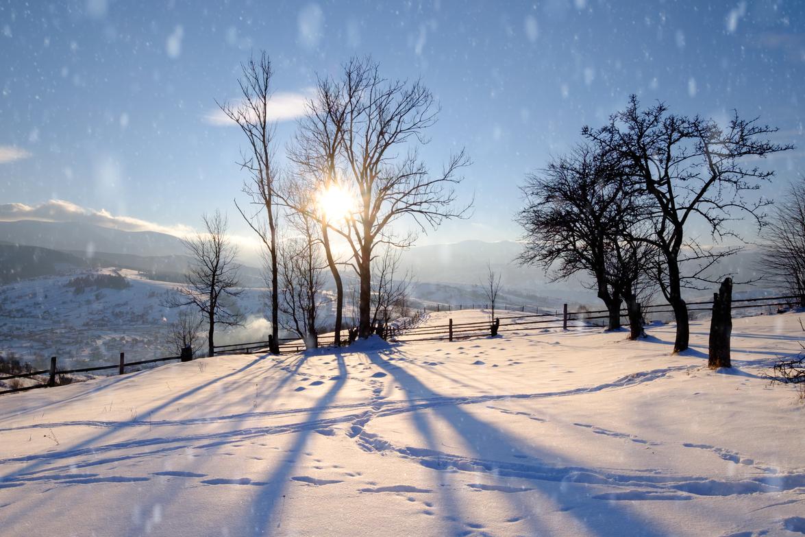 Winter Pests in Ohio