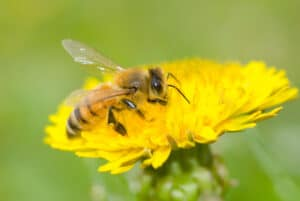 Protect your Ohio Home or Business from Bees, Wasps, and Hornets