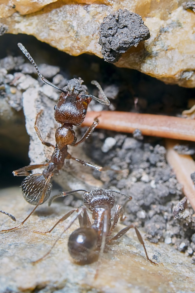Keep Ants Out of Your Home or Business this Spring and Summer