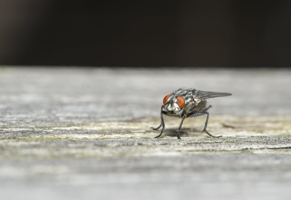 Keep Flies Out of Your Home
